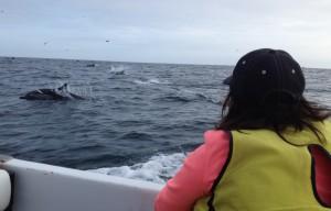 Mancora Peru: dolphins swimming along boat